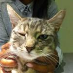 Bindehautentzündung durch Infektion mit Erregern des Katzenschnupfens