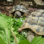 Ernährung Schildkröten