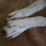 Akkupunktur Fuß