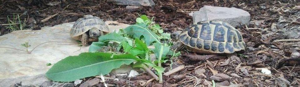 Ganzheitliche Konzepte für die Landschildkröte