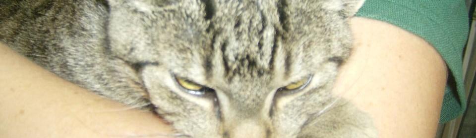 Biodynamische Katzennahrung – selbstgemacht